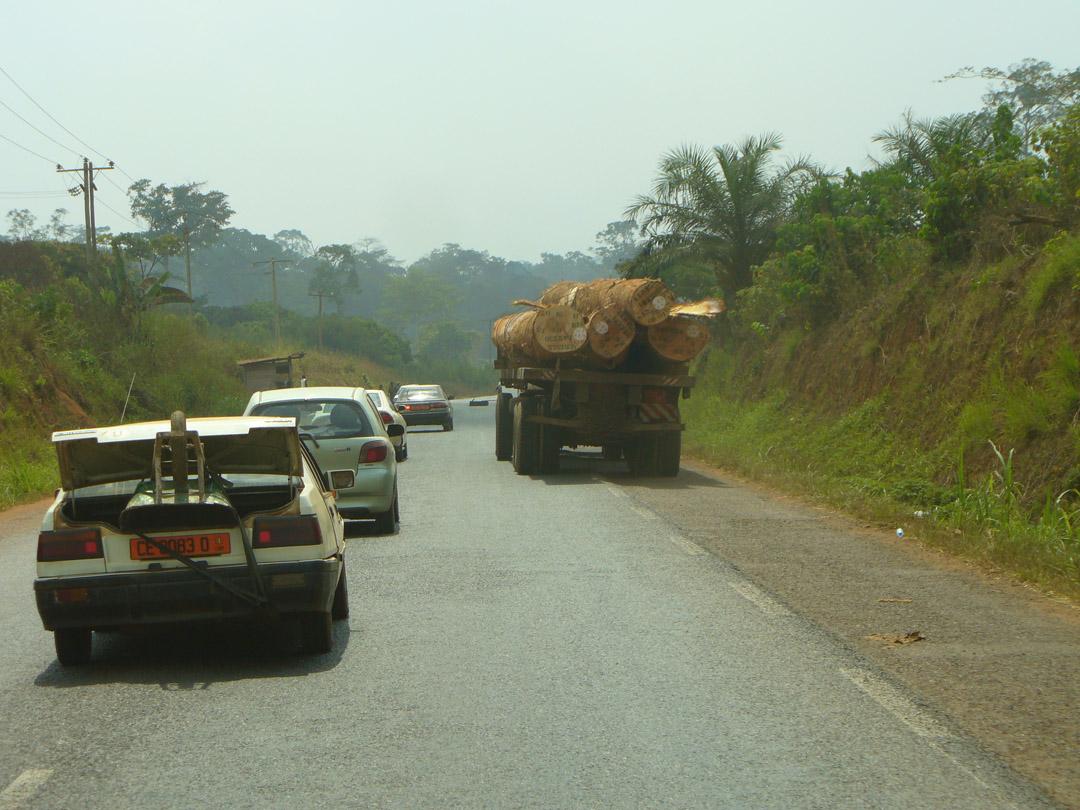 Cameroon deforestation logs
