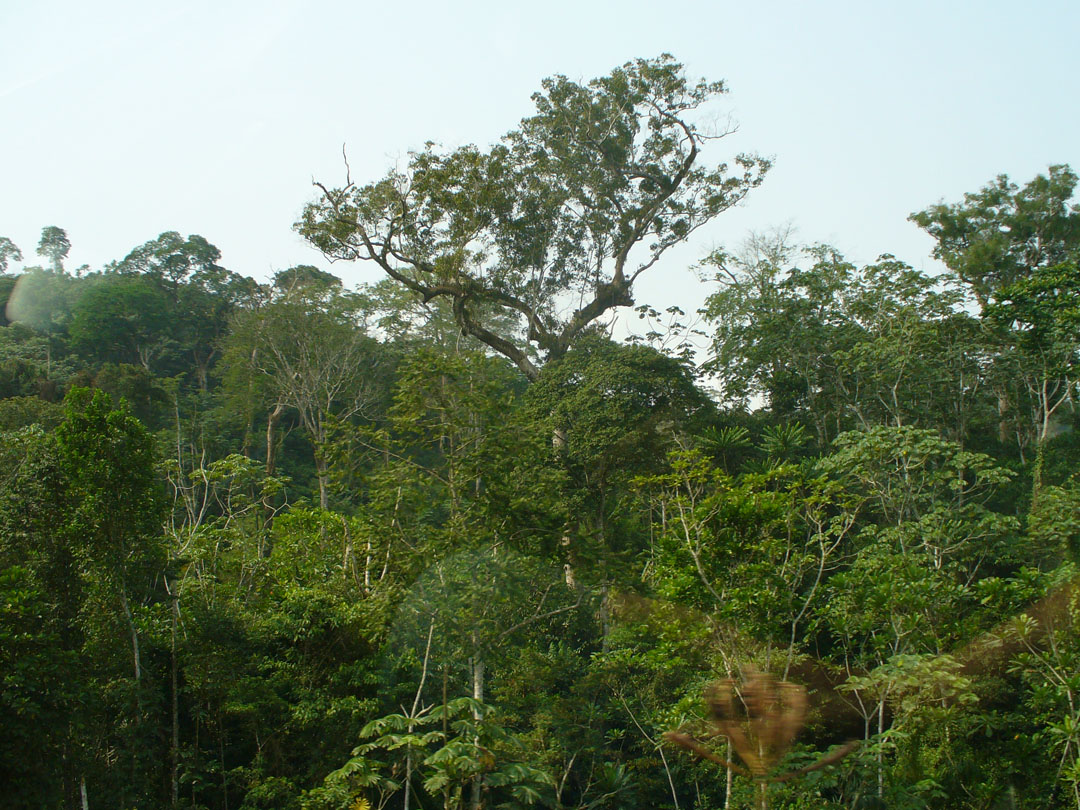 I'm back in the Cameroon jungle