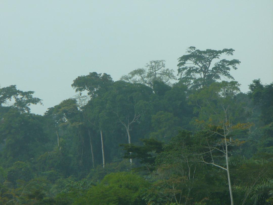 Cameroon jungle