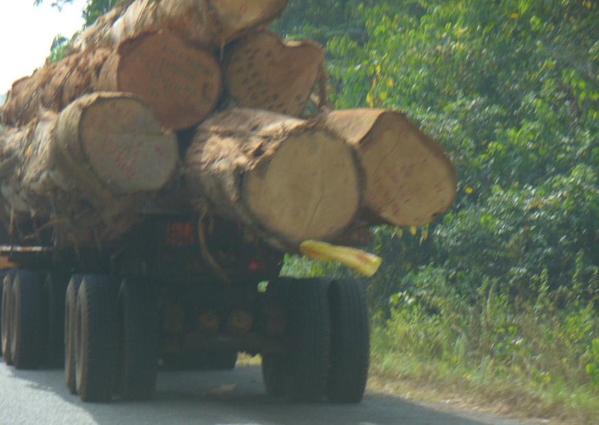 African logging / Deforestation
