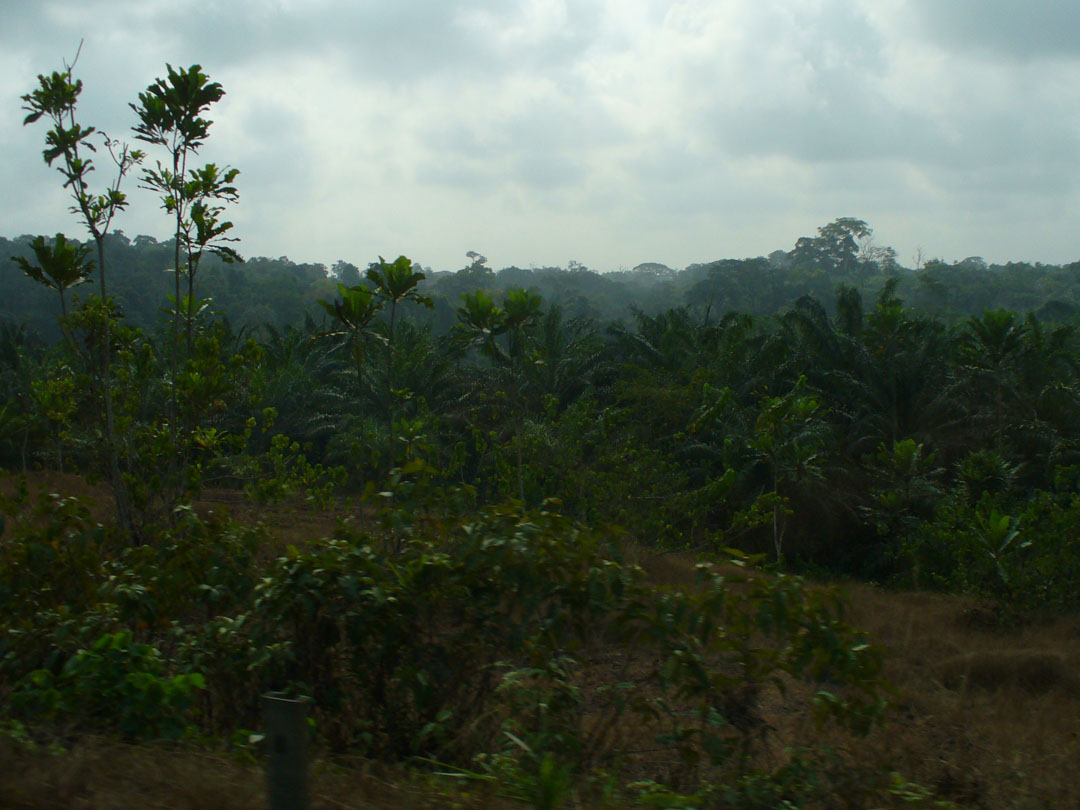 Just another Cameroon jungle