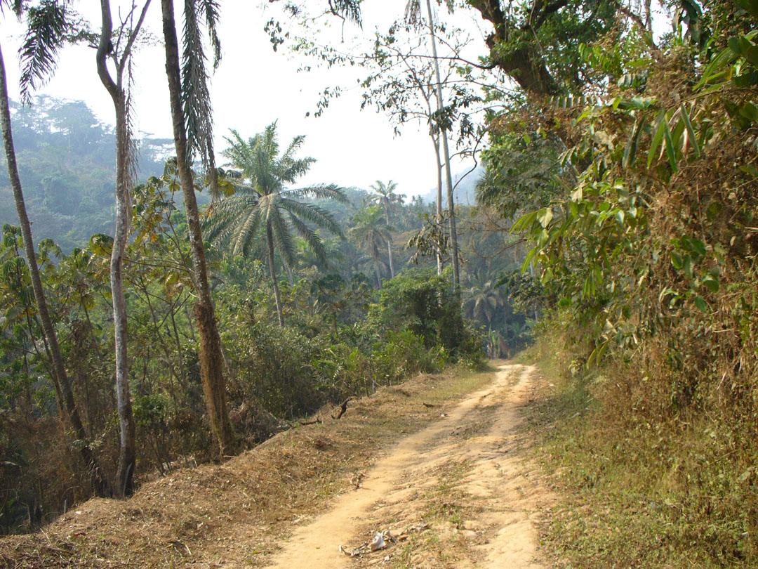 Remote jungle path