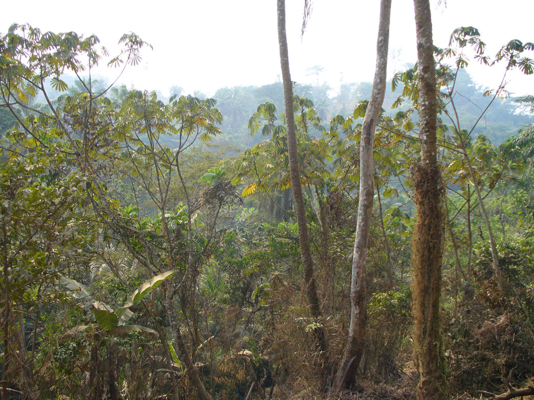 Cameroon jungle scene
