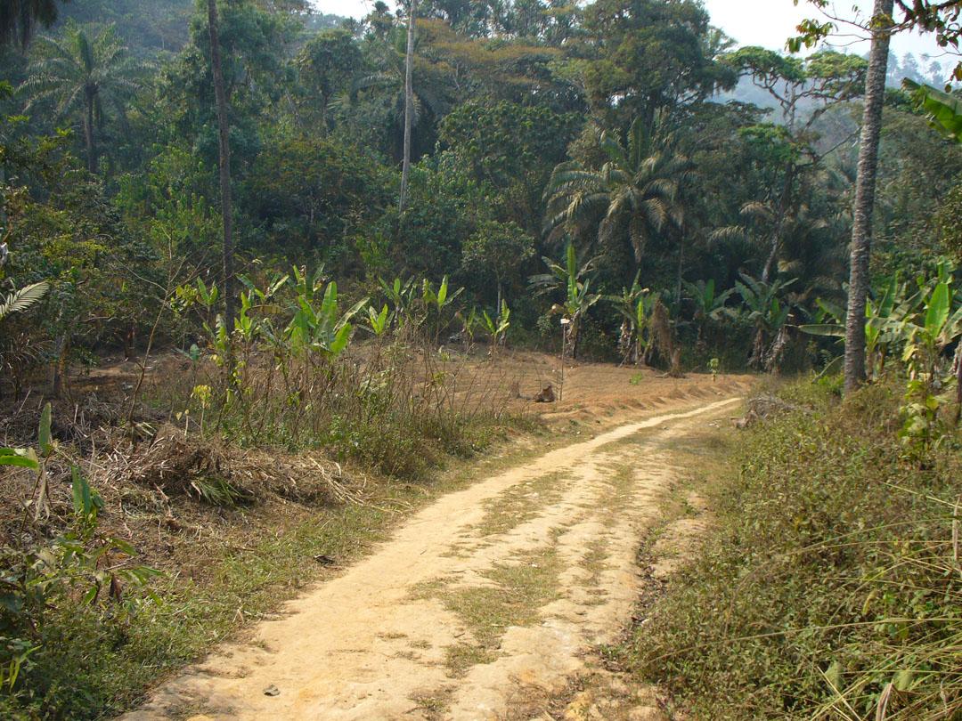Cameroon jungle path