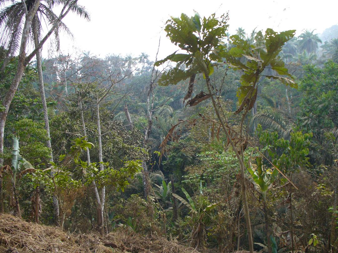 Cameroon jungle off the beaten path