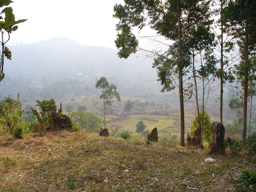Jungle workshop view